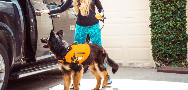 tuggit dog harness product prototype with woman letting a dog into a car