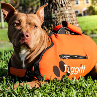 tuggit dog harness prototype on a dog in a south florida park portfolio icon